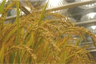 お米や野菜が栽培できる環境を創っています!