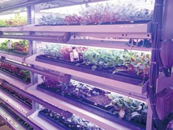 人工光型植物栽培施設